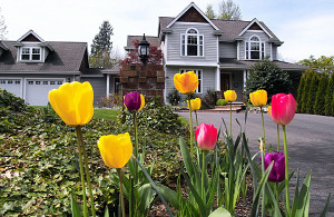 tulips_house-300x195